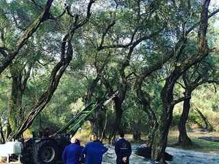 Tour to the old olive groves