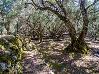 Olive groves private tour
